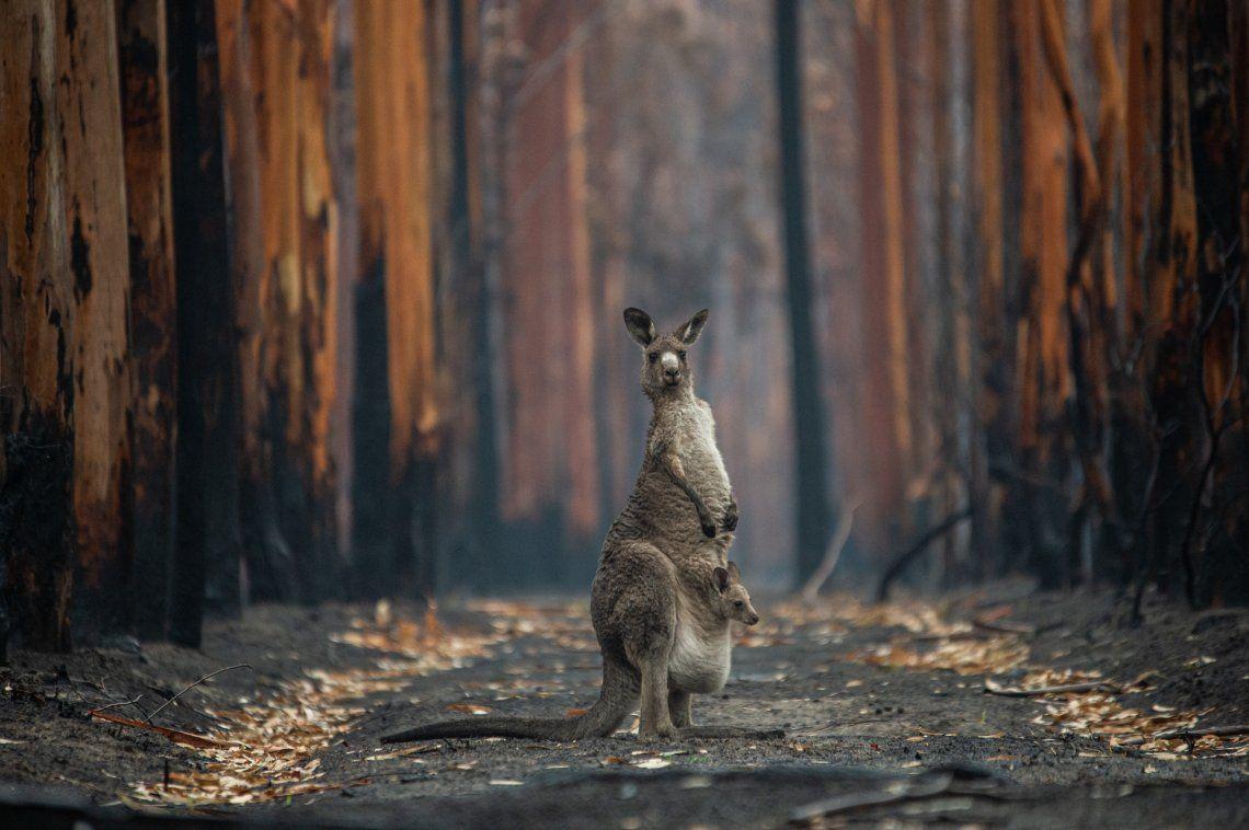 Ganador categoría hombre y naturaleza: Jo-Anne McArthur | Hope in a Burned Forest