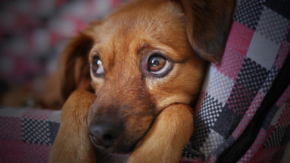 Gritarle y manipular físicamente a tu perro repercute mal en su mente