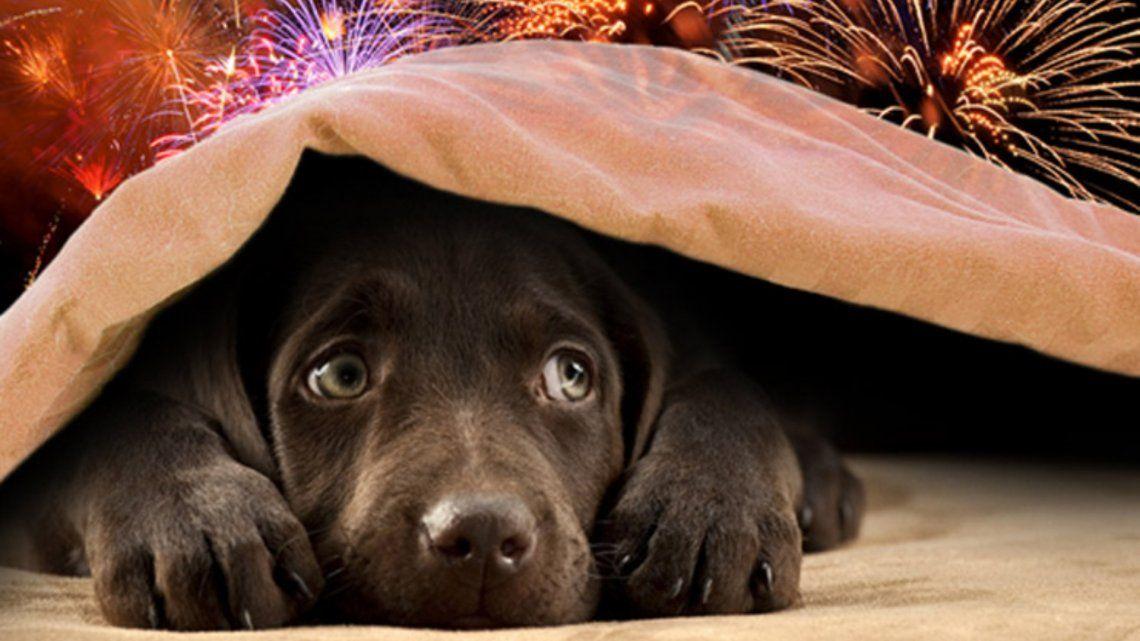 Perros y gatos felices: cayó la venta de fuegos artificiales