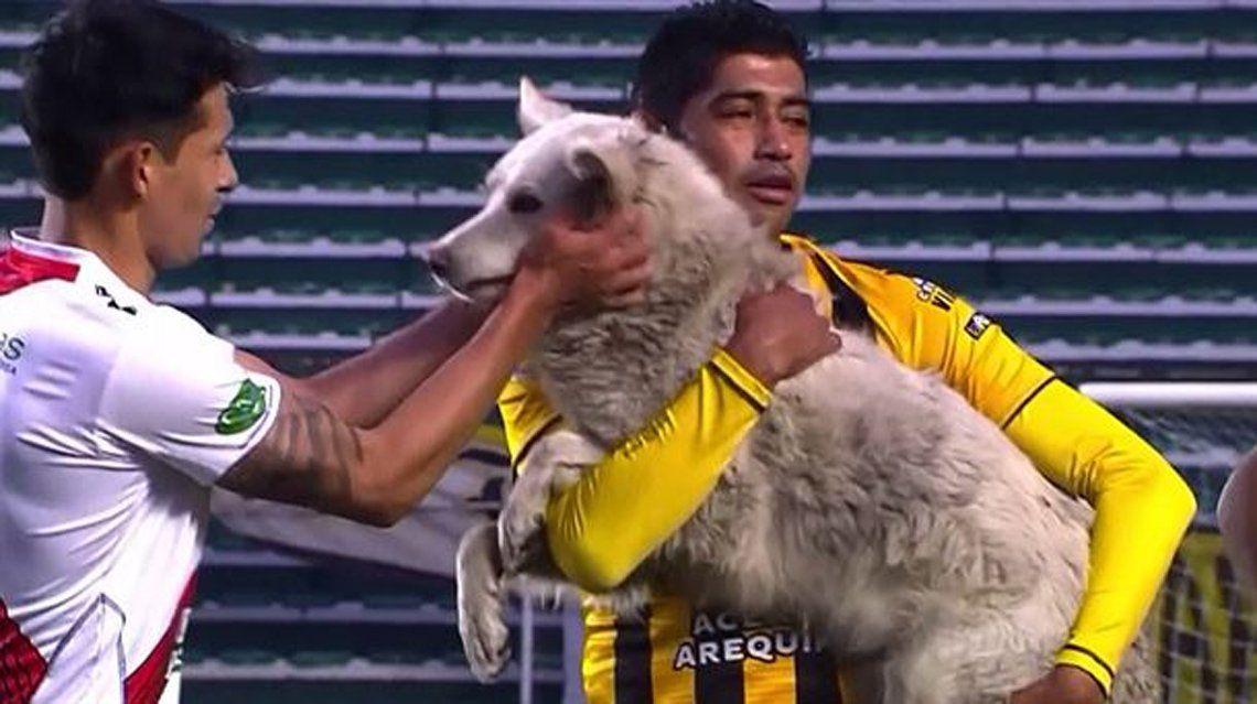 El perro fue sacado del campo de juego.