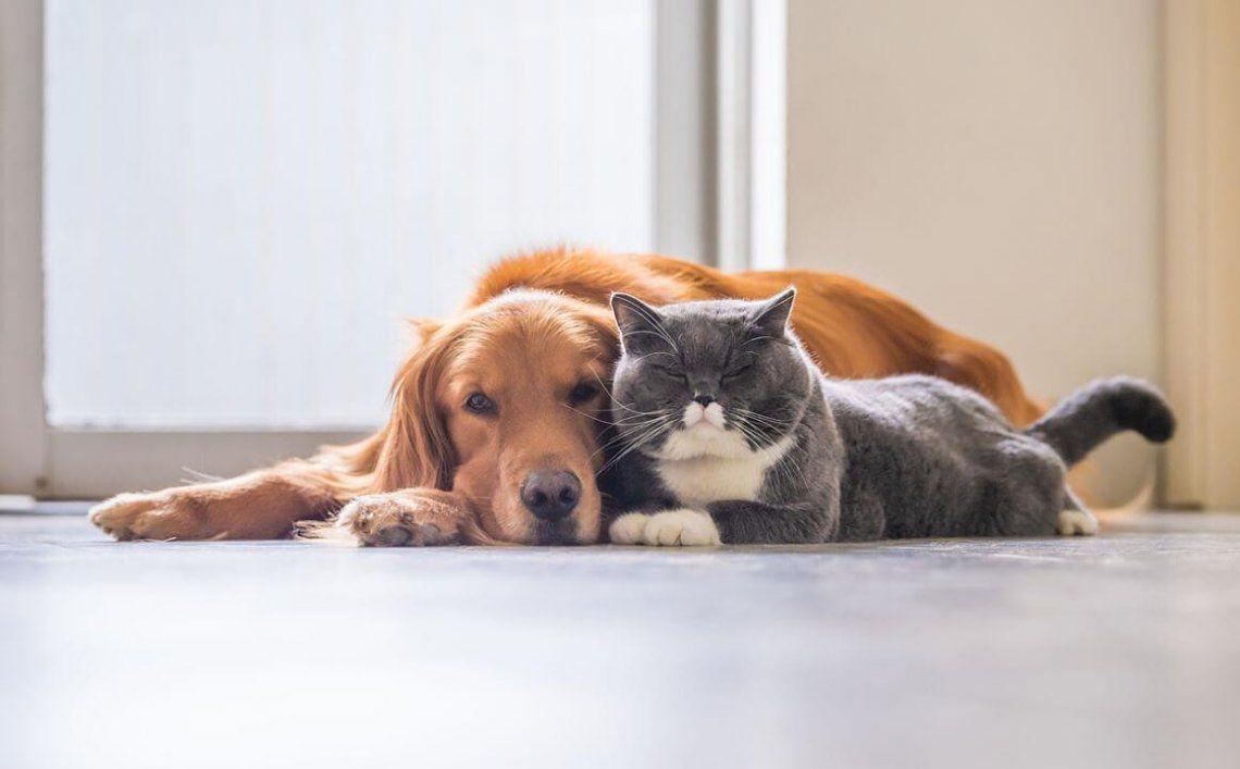 Año Nuevo: consejos de seguridad-bienestar para los animales.