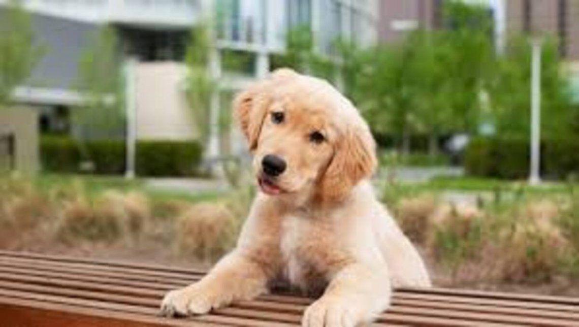 El video de Doggy mirando las carreras de caballos fue un éxito. ¡Habrá acertado al ganador?