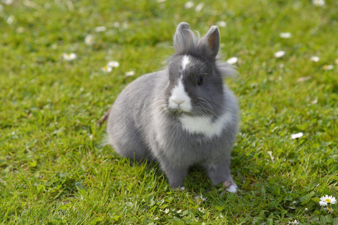 El video del conejo rescatado se volvió viral