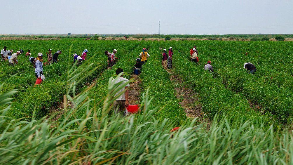 Procesan a directivos de productora de frutos rojos por trata laboral