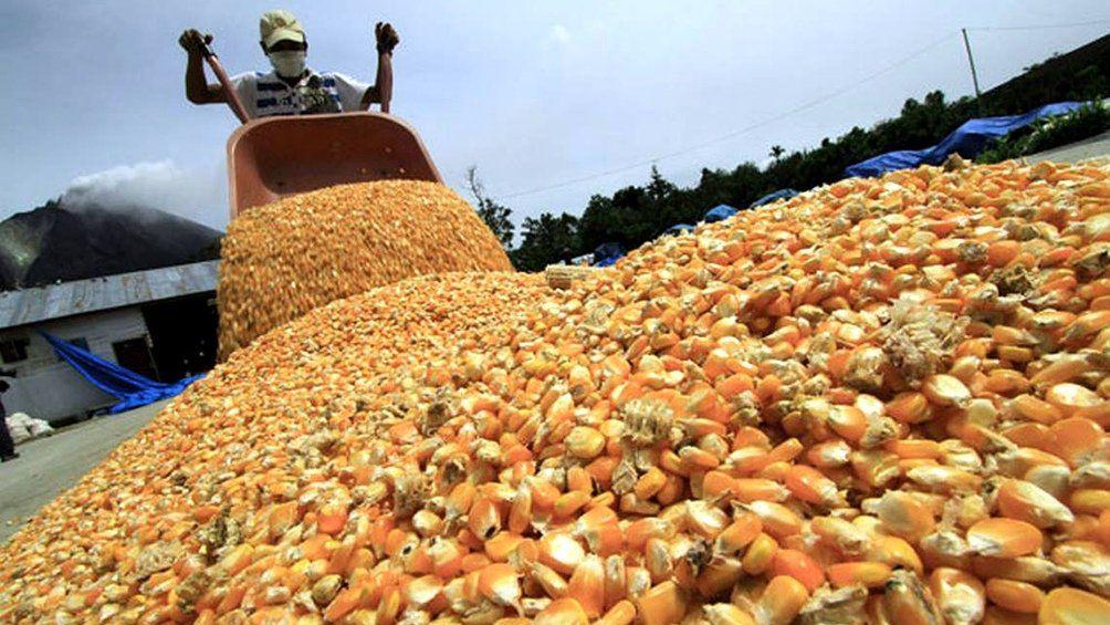Maiz: sin restricciones a la exportación.