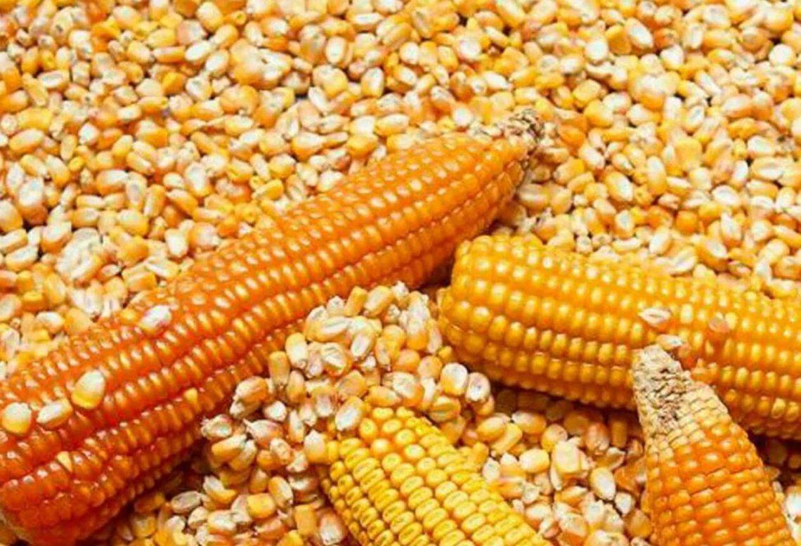 Exportaciones de maiz: continua el paro patronal del campo