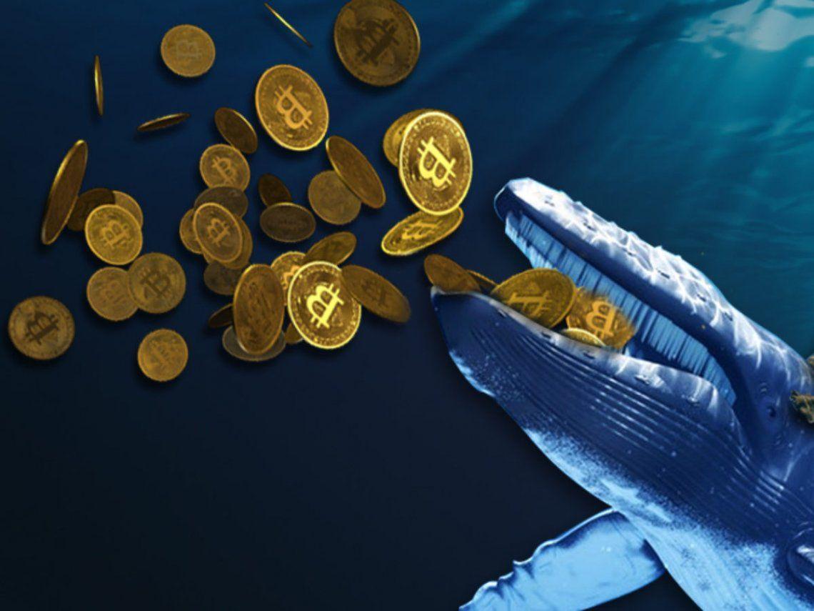 Criptomonedas: ¿Qué son las Ballenas Bitcoin?