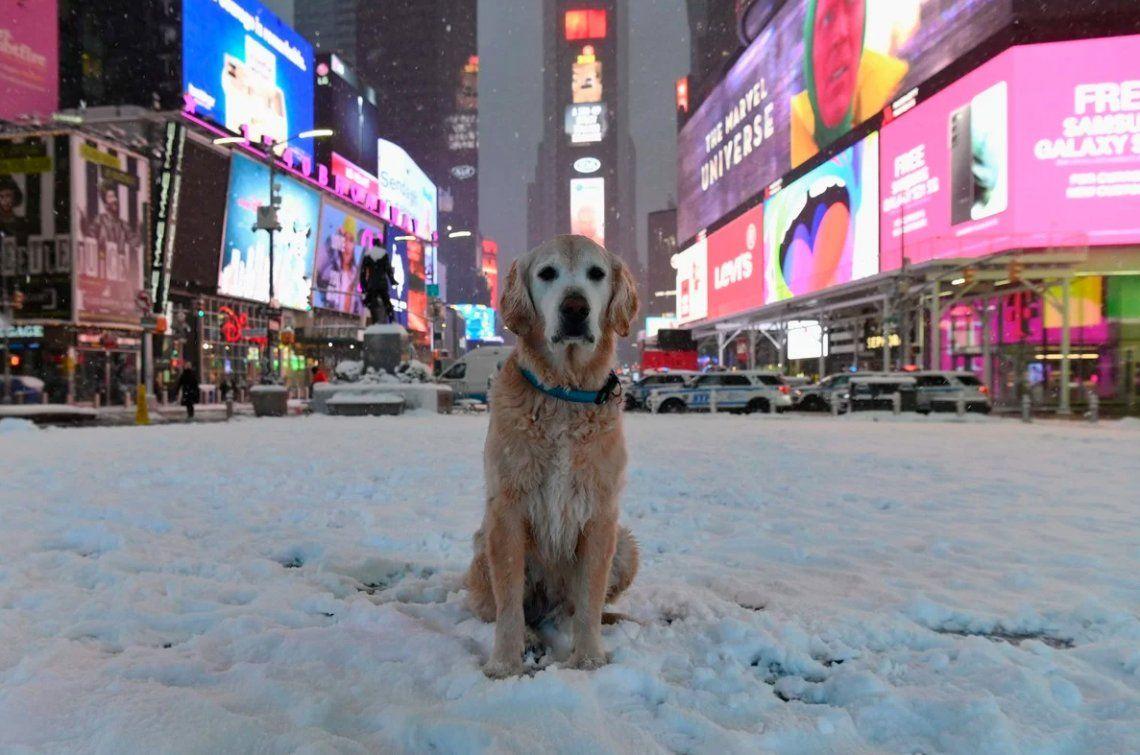 Nueva York enfrenta una de las mayores nevadas de su historia.