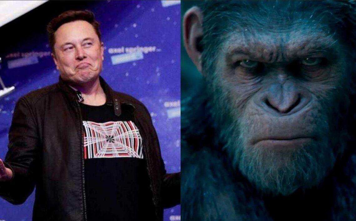 Elon Musk le implantó un chip en la cabeza a un mono