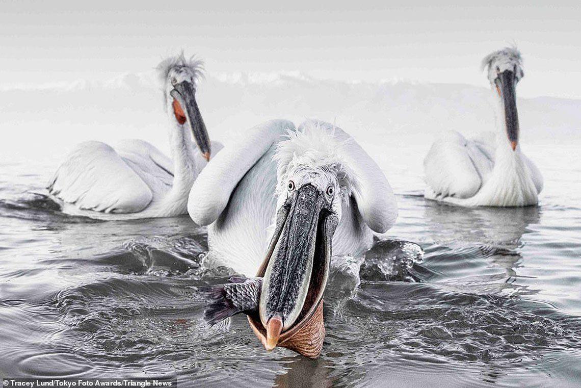 Las mejores fotos del Festival Internacional de Foto de Tokio
