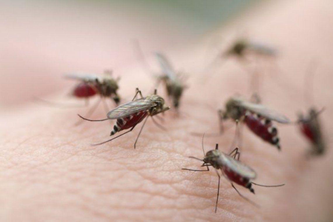 AMBA: ¿A qué se debe la invasión de mosquitos?