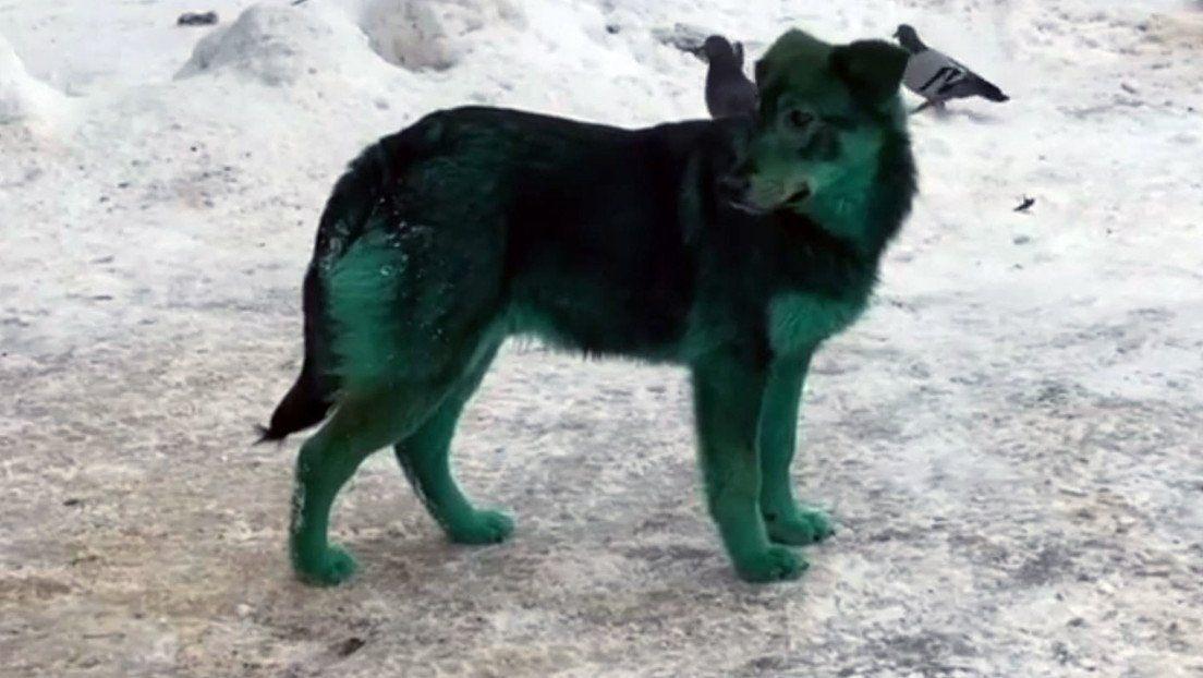 Rusia: perros de color verde