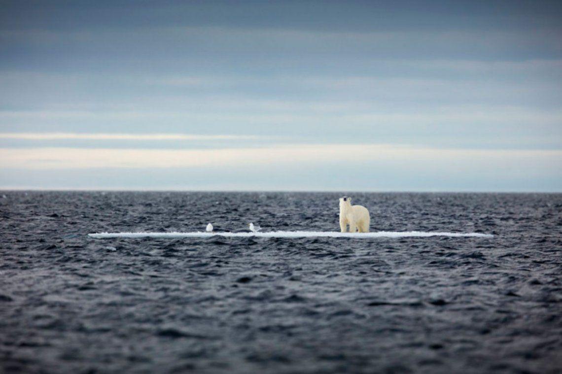 Seleccionado - Sobre hielo fino. Sue Flood / RPS SPOTY