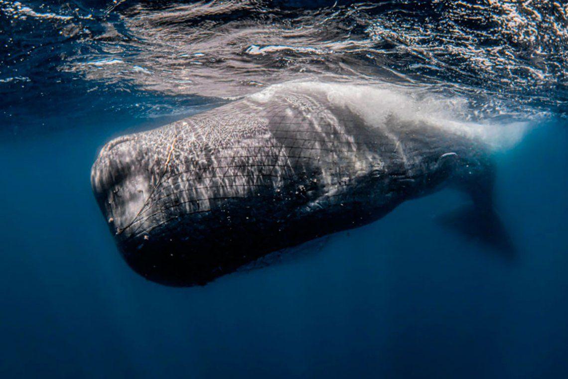 Seleccionado - La red estrangulando el océano. Rafael Fernandez / RPS SPotY