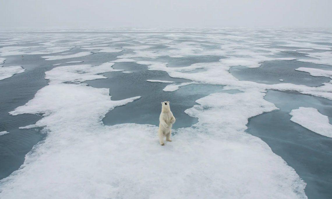 Ganador polar
