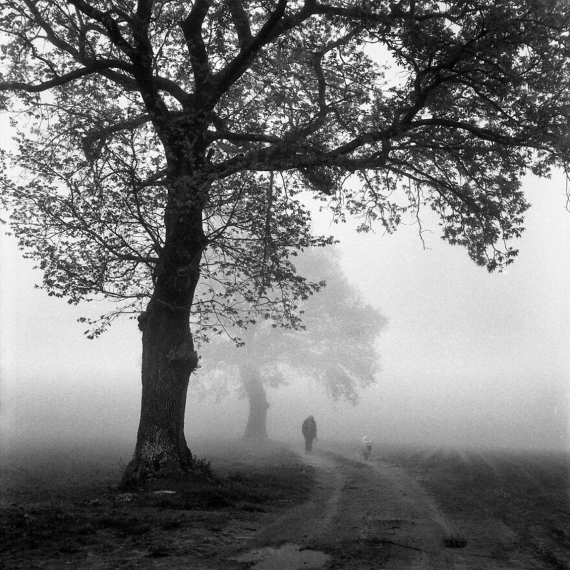 Walk In The Fog (2do lugar / Analógico / Cine / Paisaje)