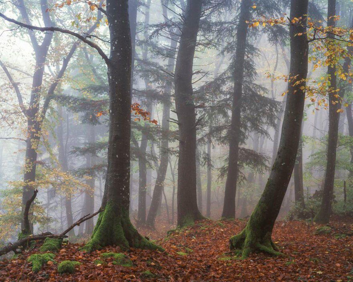 Brouillard (1er lugar / Analógico / Cine / Paisaje)