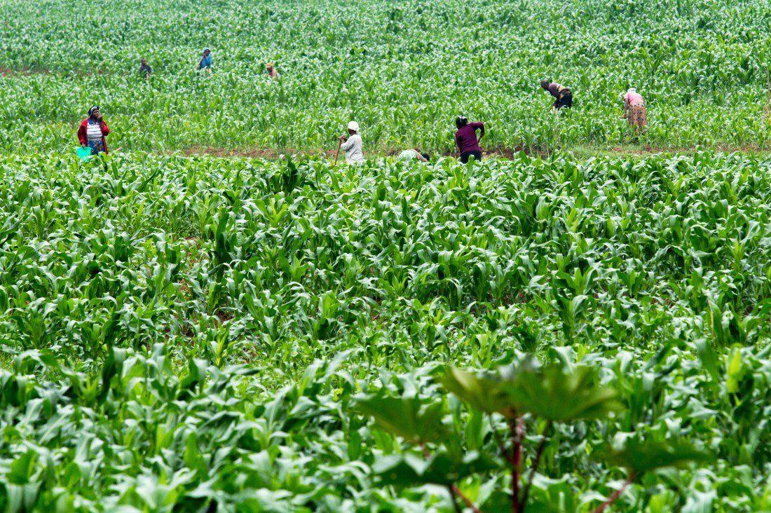 Rescatan a más de 100 trabajadores rurales en condiciones infrahumanas en San Juan y Corrientes
