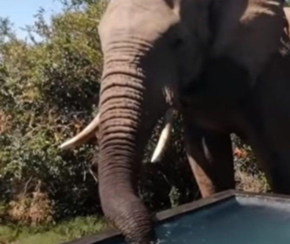 Sudáfrica: elefantes en la pileta de un hotel.