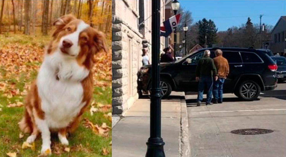 Estados Unidos: perro roba un auto, lo choca y le sacan la licencia