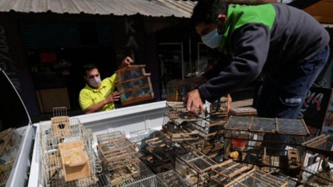 Las autoridades solicitaron que los animales sean trasladados a la Reserva Ecológica Costanera Sur.
