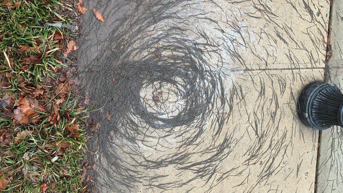 Tornado de lombrices en Estados Unidos.