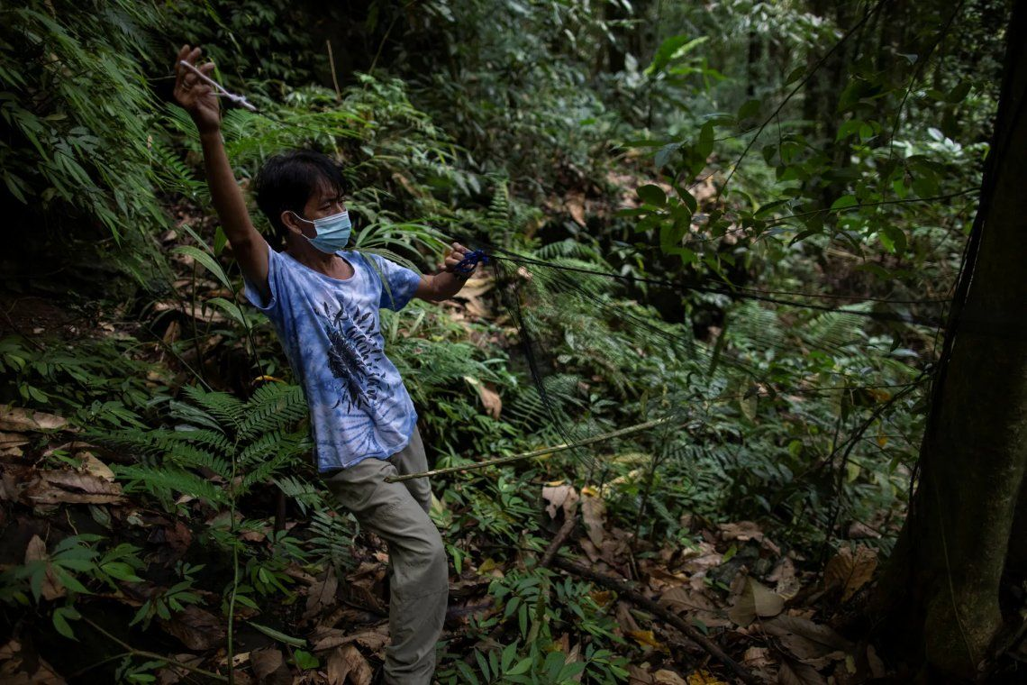 En fotos: cazadores de murciélagos luchan contra la próxima pandemia