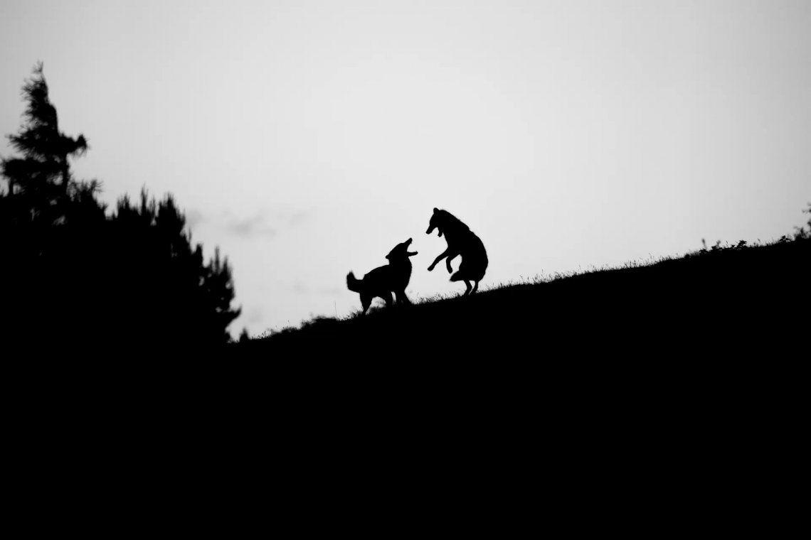 Seleccionado: Danza de los zorros por Ruth Chamberlain. Fotografía: Ruth Chamberlain