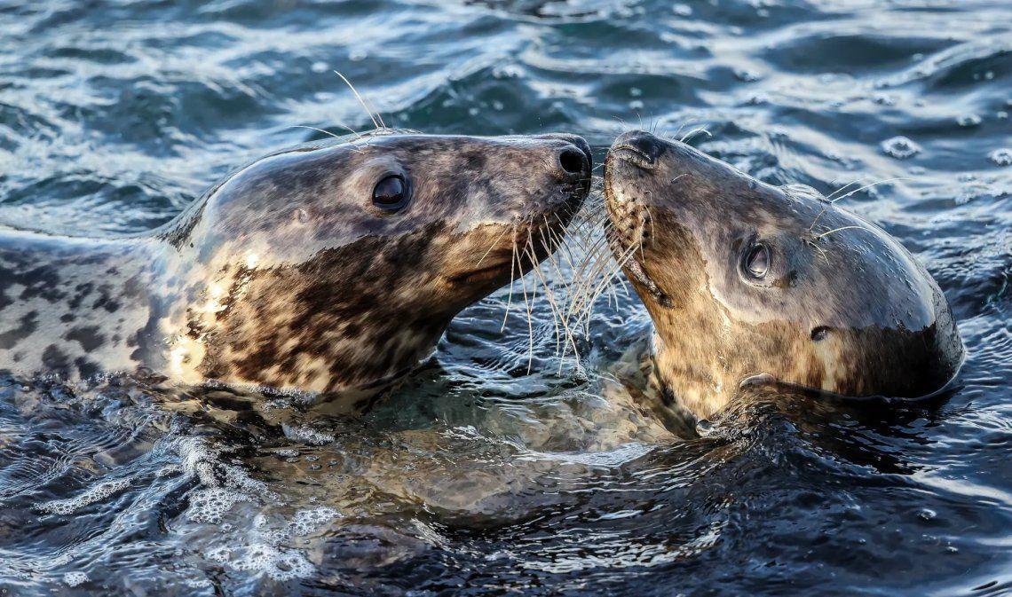 Seleccionado: Seals por Robin Morrison. Fotografía: Robin Morrison