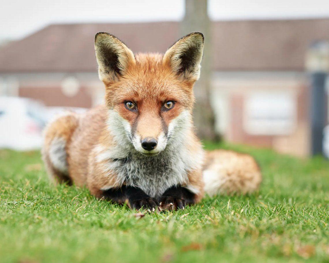 Seleccionado: Fox Cub por Martin Urch. Fotografía: Martin Urch