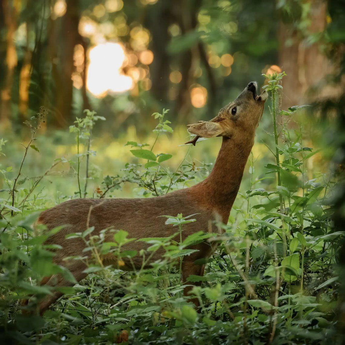 Seleccionado: Estiramiento de ciervos por Jeremy Robbins. Fotografía: Jeremy Robbins