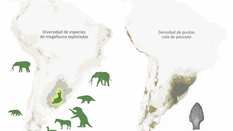 Plantean que la megafauna se extinguió por la depredación humana