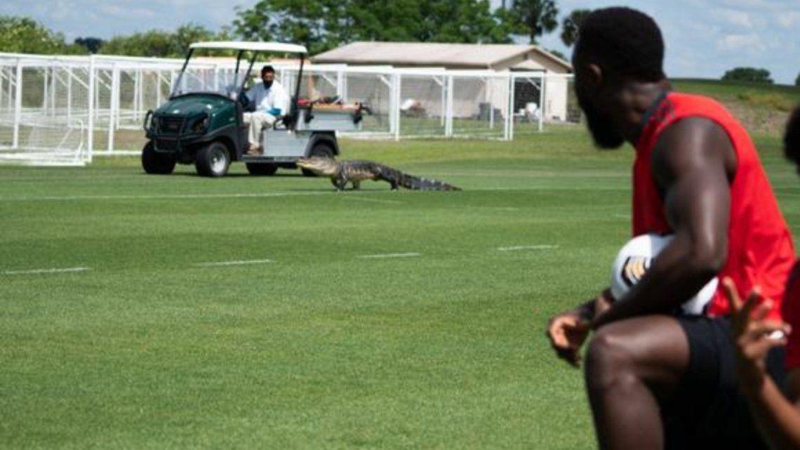 Un cocodrilo enorme apareció en el entrenamiento del Toronto FC.