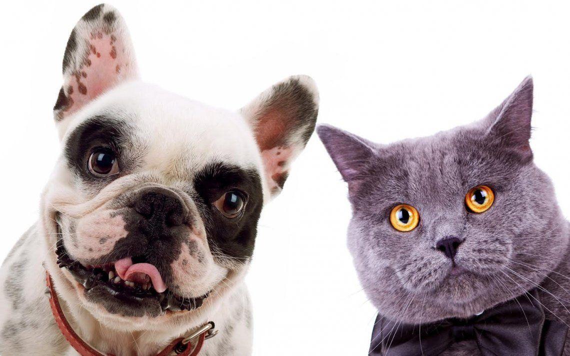 Día del Animal: por qué se celebra el 29 de abril en la Argentina.