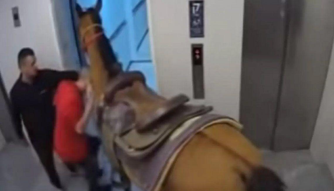 Israel: un caballo tomó un ascensor.