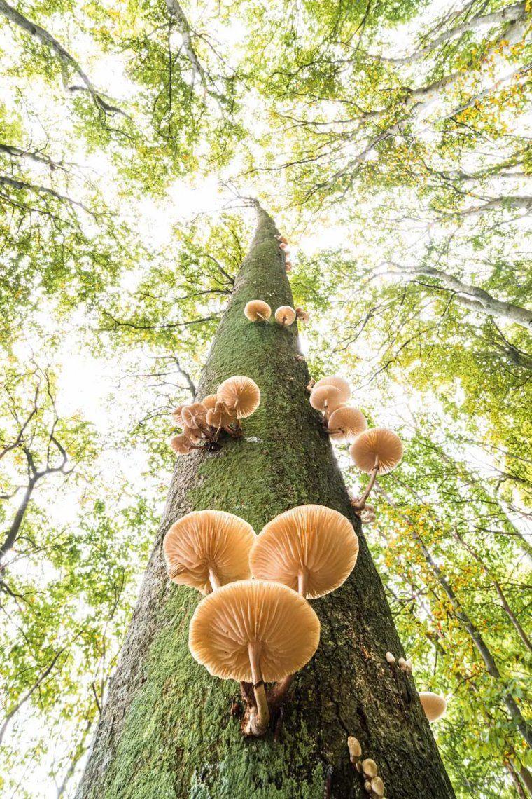 Ganador de la categoría de plantas y hongos. Oudemansiella mucida. Fotografía: Stefan Imig
