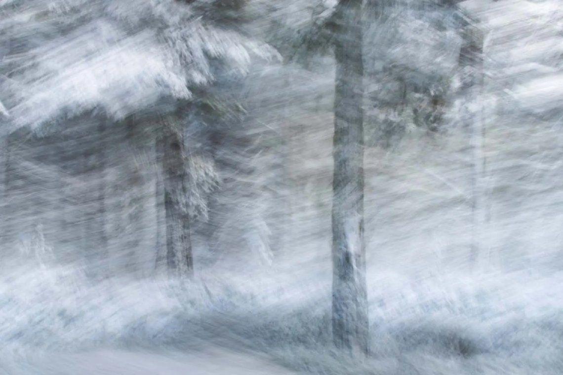 Subcampeón de la categoría estudio de la naturaleza. Bosque de invierno. Fotografía: Jan Leßmann