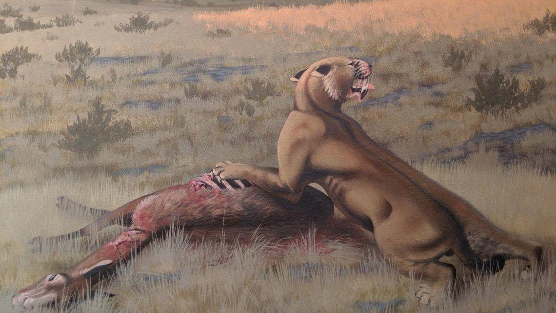 Estados Unidos: descubren restos de uno de los tigres diente de sable más grandes de la historia
