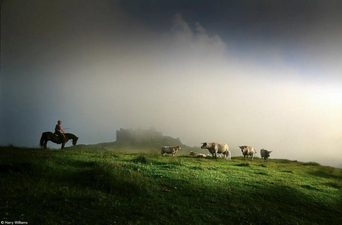 Comida en el campo: granjero con su ganado de cuernos largos por Harry Williams