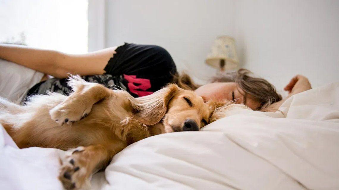 Trabajo soñado: ofrecen 1.500 dólares por dormir la siesta todos los días