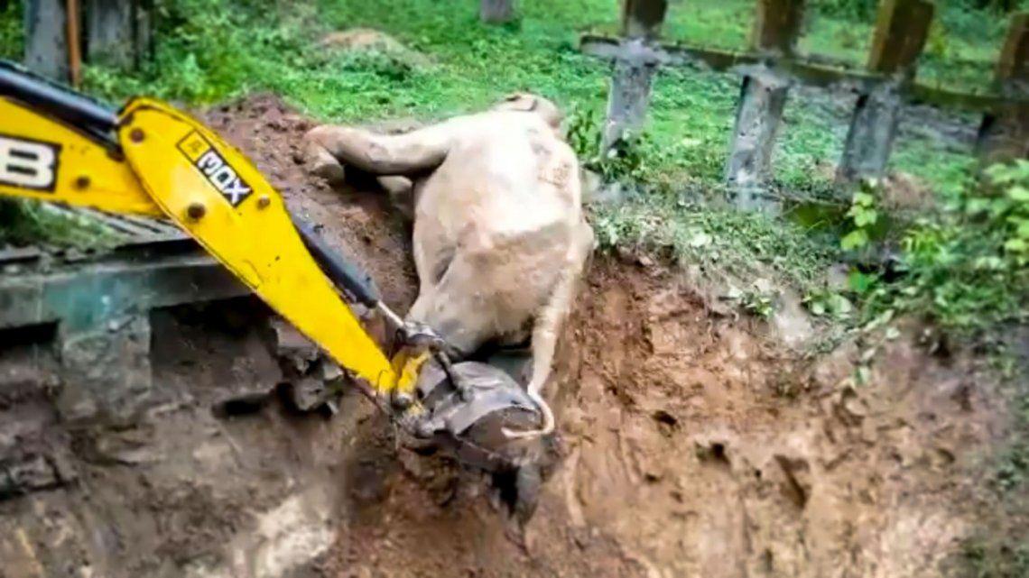 Rescataron a un elefante.