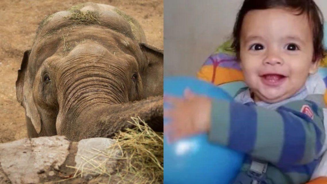 Santi Maratea comprará un implante auditivo a un bebé y pagará el traslado de un elefante a un santuario en Brasil.