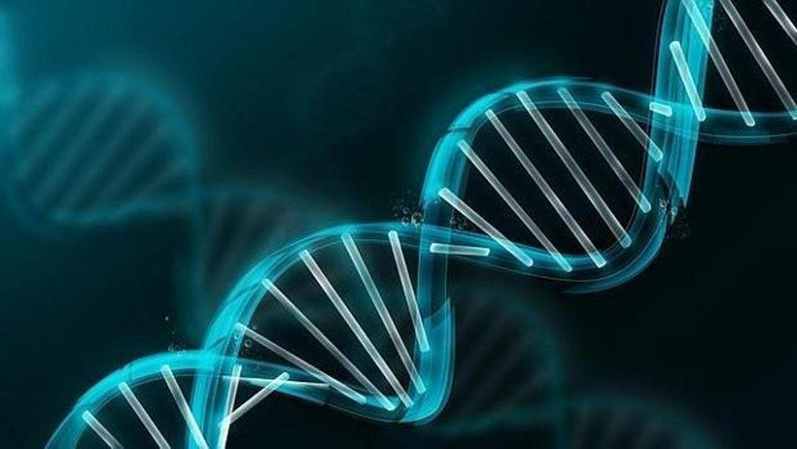 Genoma humano.