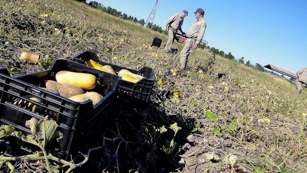 Organizaciones rurales lanzan la Mesa Agroalimentaria Argentina