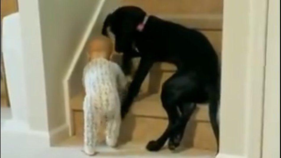 Un cachorro y una bebé.