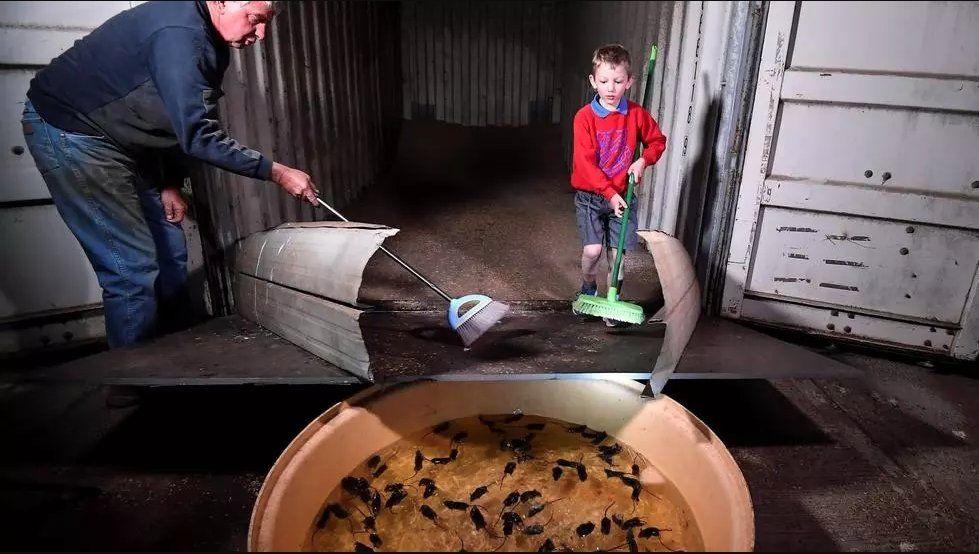 Los agricultores de Australia son los que más se ven afectados por la plaga de ratones.
