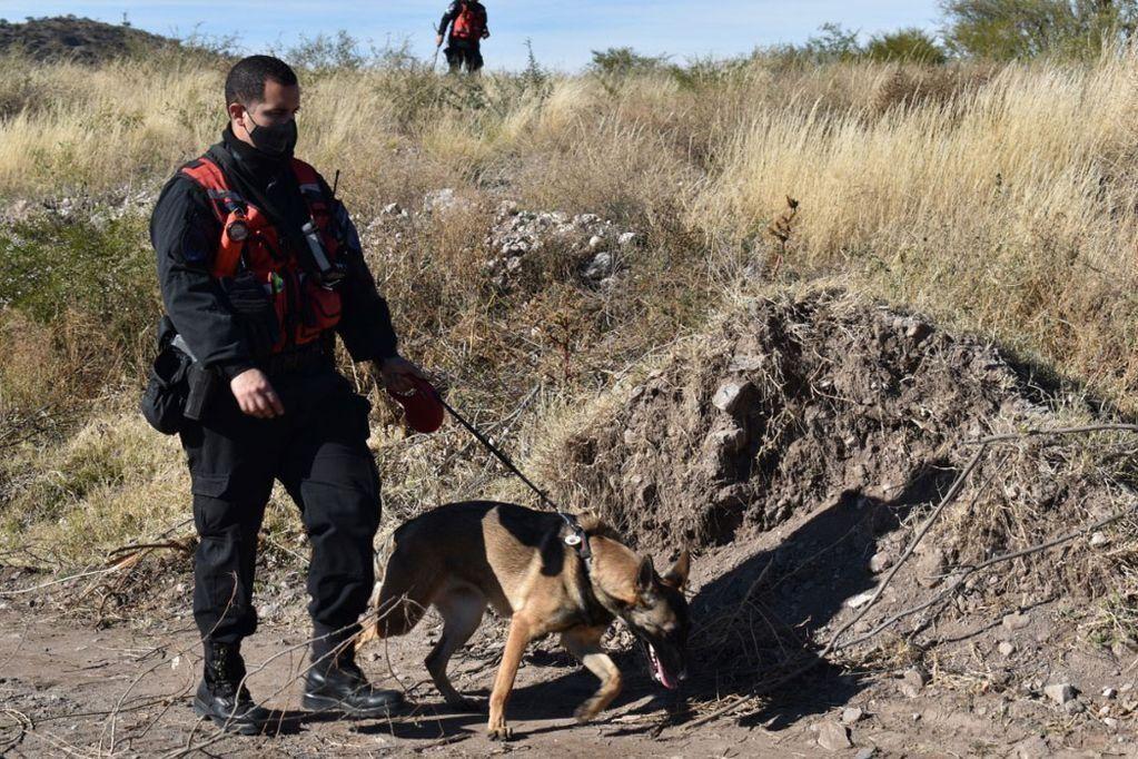 Una perra de las varias que trabajan en el rastrillaje de Guadalupe junto a un policía de San Luis.