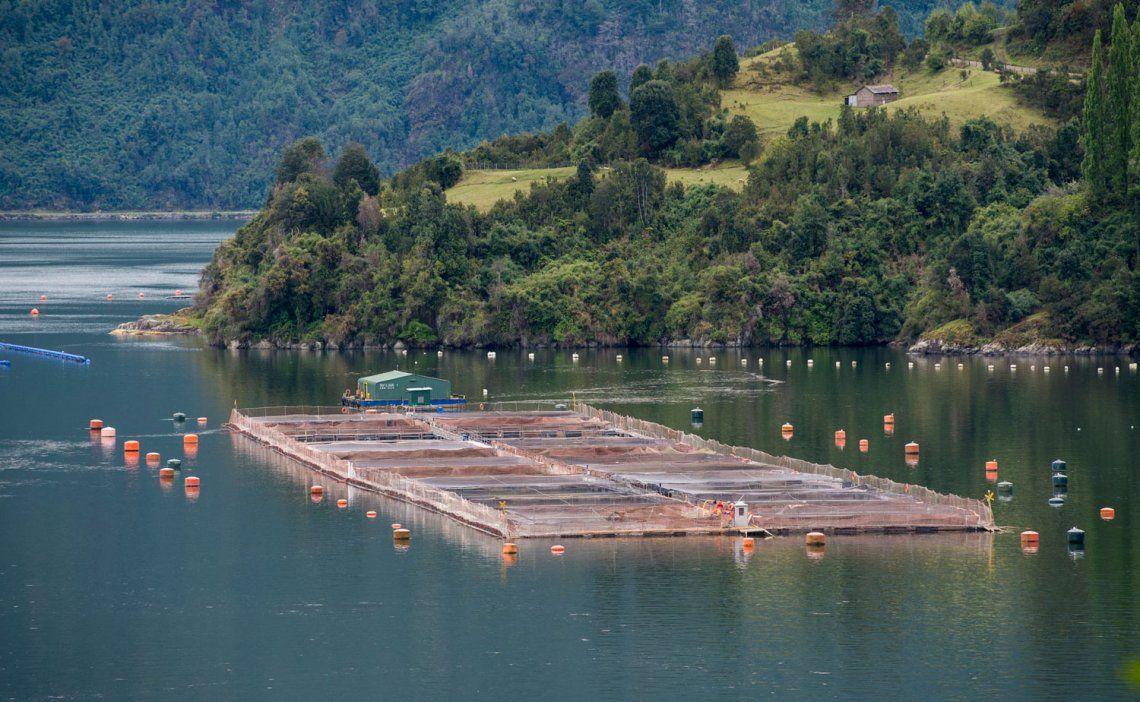 Tierra del Fuego prohibirá por ley la cría de salmones