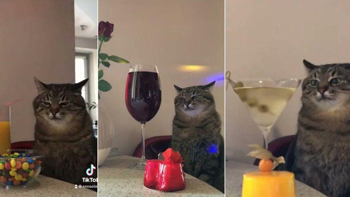 TikTok: gato te recuerda esas fiestas aburridas a las que fuiste.
