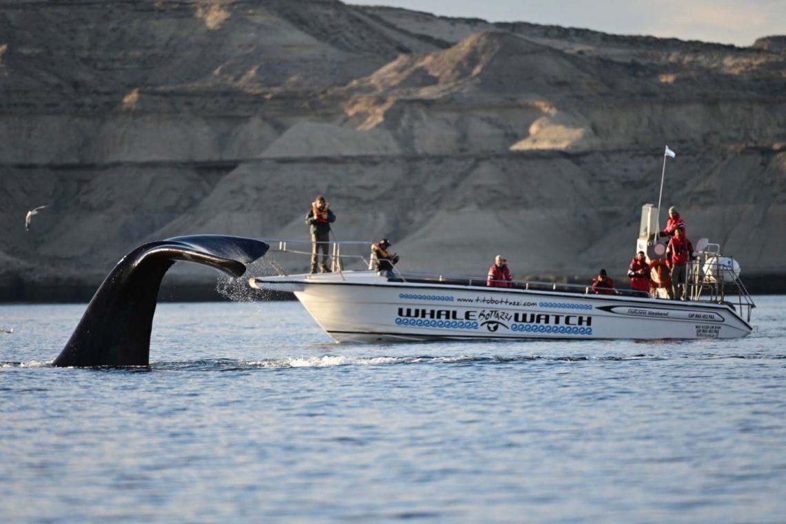 En fotos: comenzó la temporada de avistajes de ballenas en Puerto Madryn
